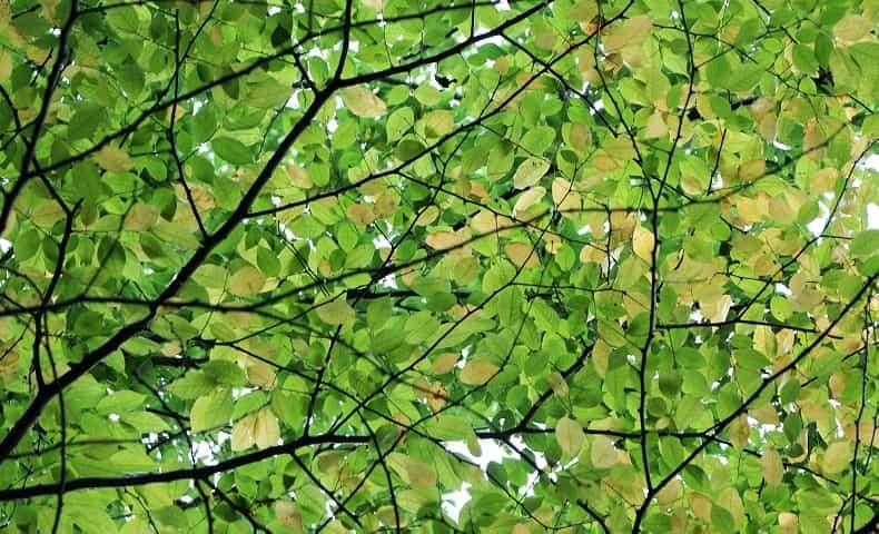 緑が眩しい木々の中
